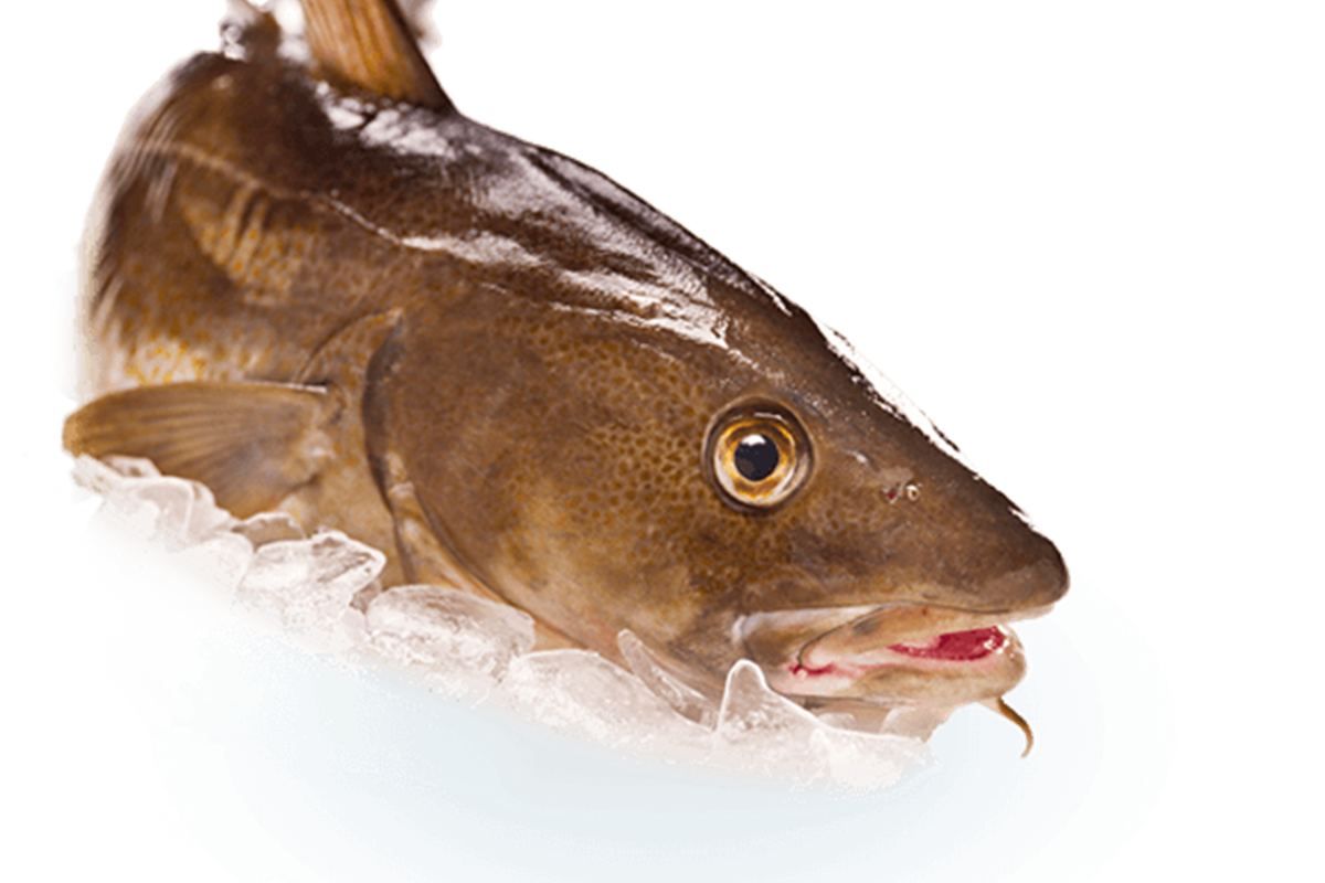 Icelandic Cod-, Haddock- and Saithe fisheries re-certified